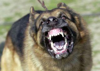 Câinii agresivi, în atenţia poliţiştilor locali din Arad