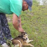 Polițiștii locali din Arad au recuperat de pe străzi doi câini de rasă