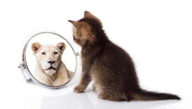 Secrete care atrag succesul: Cum să crești încrederea în tine?