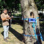 Primăria Arad a cumpărat echipament cu care vor fi făcute tomografii copacilor bătrâni