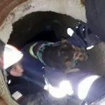 Câine căzut într-un canal, salvat de pompierii arădeni