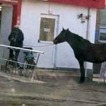 A fost identificat proprietarul calului priponit în fața unui supermarket din Alfa