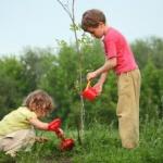 """Au început înscrierile pentru Programul Național de plantat păduri """"Pădurea Mea"""", ediția 2020"""