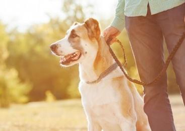 Lesa pentru câine – cum o alegi corect?