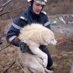 Câine salvat de pe o stâncă de pompierii din Sebiș