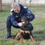 Trei căţeluşe din rasa Rottweiler au început pregătirea la IJJ Arad