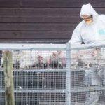 Măsuri de supraveghere în județul Arad, în urma evoluţiei gripei aviare din Ungaria