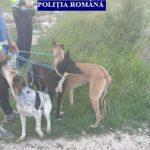 Doi tineri au fost prinși la braconaj pe un fond de vânătoare din Berechiu