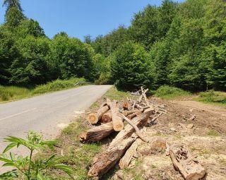 Exploatări forestiere amendate pe drumul județean Julița – Mădrigești