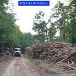 Controale la fondurile forestiere de pe raza ocoalelor silvice Codrii Zărandului și Codrii Iancului