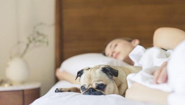 Cum să-ți proiectezi dormitorul pentru un somn odihnitor?