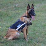 Jandarmii arădeni și-au întărit rândurile cu un câine de serviciu specializat în căutare/prelucrare urme