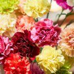 Livrare flori Bucuresti gratuita pentru orice comanda
