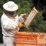 Apicultorii din Arad spun că au cea mai slabă producţie de miere din ultimii 50 de ani