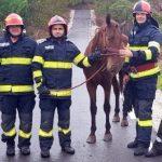 Cal căzut într-o râpă adâncă de 25 metri, salvat de pompieri