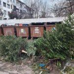 SecolecteazăbraziideCrăciun, la Pecica
