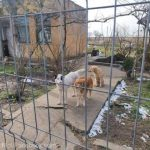 UPDATE Peste 50 de câini ţinuţi de o femeie, eliberaţi de poliţişti şi preluaţi de o asociaţie