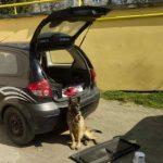 Câine abandonat într-o mașină, în Arad. Era hrănit de trecători