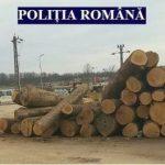 Controale la firme din Sebiș și Cuied care comercializează lemne