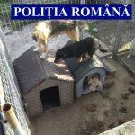 Câini ţinuţi în condiţii improprii la fosta stație de epurare din Șiria, găsiţi de poliţişti