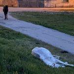 Cai abandonați pe o stradă din Arad. Animalele au fost plasate în adăpost