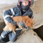 Câine salvat dintr-un canal. A fost adoptat de pompierii salvatori