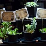 "Expoziția ""Aloe – planta minune"", la Complexul Muzeal Arad"