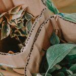 Folosirea ambalajelor biodegradabile: 4 beneficii pentru afacerea ta