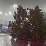 UPDATE 2 Acoperişuri luate de vijelie şi copaci rupţi, după o furtună puternică în județul Arad