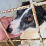 Amenzi de 18.000 lei pentru o femeie care ținea 57 de câini într-o casă din Gurba