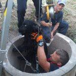 Pentru că orice viață contează! Pompierii arădeni au salvat un câine căzut într-o fântână